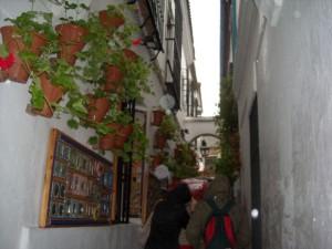 Hiszpania / Andaluzja 8 dni